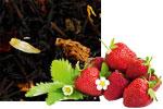 Schwarztee mit Erdbeere von Elitas CHAI